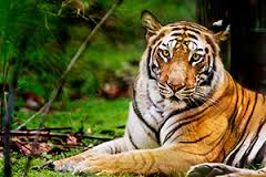Golden Triangle with Bandhavgarh Tour