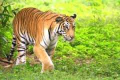 Golden Triangle with Ranthambhore Tour